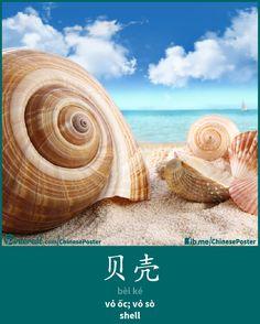 贝壳 - bèi ké - vỏ sò; vỏ ốc - shell