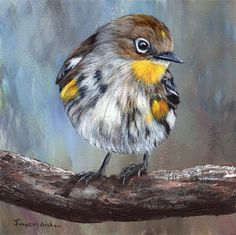 """Daily+Paintworks+-+""""Yellow+Rumped+Warbler+No+2""""+-+Original+Fine+Art+for+Sale+-+©+Janet+Graham"""