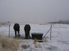 SUPPORT ANIMAL WELFARE IN UTAH! There is no law mandating that farm animals be provided shelter from severe weather despite them cruelly being placed in fenced environments which prohibit them from being unable to seek shelter on their own! Farm Animals, Funny Animals, Cute Animals, Post Animal, Stop Animal Cruelty, Puppy Mills, Severe Weather, Animals Of The World, Animal Welfare