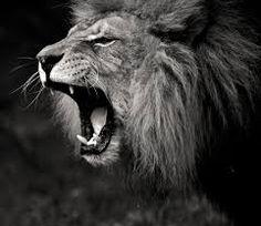Resultado de imagem para lion and lioness love quotes