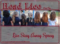 Lice Stay Away Spray - Fill a 5 ounce spray bottle with water. Add 5 drops EACH of these Essential Oils Tea tree Lavender Rosemary Peppermint Eucalyptus Shake well before spraying on your child's hair Essential Oils For Lice, Essential Oil Uses, Young Living Oils, Young Living Essential Oils, Lice Repellent, Lice Remedies, Tea Tree Oil Uses, Hair Lice, Lice Prevention