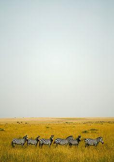 Safari ~ Africa