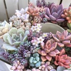 My love for succulents is true. I want to recreate this (like right now at but I can barely keep one fiddle leaf fig alive. Maybe my typical style of plant care, or lack thereof, would work on these like some sort of benign neglect. Succulent Arrangements, Cacti And Succulents, Planting Succulents, Planting Flowers, Pink Succulent, Cacti Garden, Fairies Garden, Cactus Plants, Air Plants