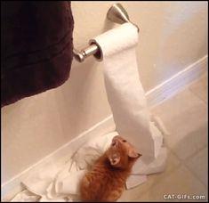 KITTEN GIF • Ginger Kitten is back. The Toilet paper killer strikes again!