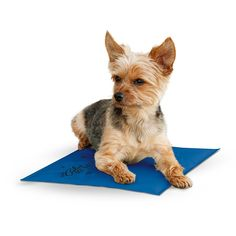 KandH Manufacturing Coolin' Pet Pad >>> Find out more details by clicking the image : Dog Beds and Furniture