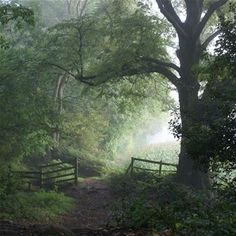 Swithland Wood, a Bradgate Park Trust wood Near: Loughborough, County: Leicestershire
