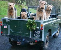 Airedales on a joy ride...