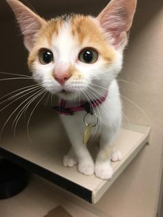 This is why i love cats.They always look cute!!!#dogs #kitty #lovecats #kittens #animals #ねこ #animal #kitten #cat #pets #ilovemycat #love #catoftheday #happynewyear #adorable #catlover #pet #meow #猫 #cute #pinterest #cutedogs