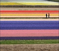 Meeting in the colours...