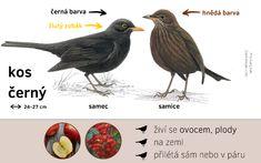 Určování ptáků - Ptačí hodinka Elementary Science, Bird Watching, Classroom Management, Biology, Montessori, Kindergarten, Homeschool, Birds, Education