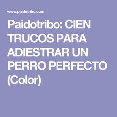 Paidotribo: CIEN TRUCOS PARA ADIESTRAR UN PERRO PERFECTO (Color)