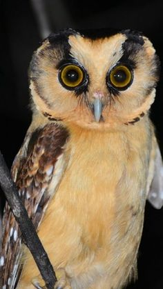 Beautiful wise old owl!