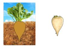 "Дидактична гра ""Що росте на городі"" Plants, Plant, Planets"
