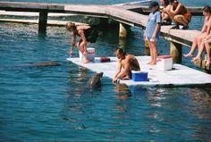 Roatan, Honduras: Field Studies in Marine Biology Quiñones Future Jobs, Future Career, Research Scientist, Work With Animals, Roatan, Marine Biology, Biologist, Dream Job, Study Abroad