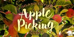 Our 2016 Apple Picking Guide will have you enjoying fresh apples just in time for fall.