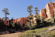 Under the Rim Trail (9 Things to Do in Bryce Canyon National Park).