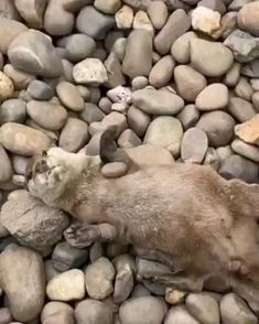 Funny Animal Quotes, Funny Animal Videos, Cute Funny Animals, Animal Memes, Cute Baby Animals, Animals And Pets, Cute Cats, Funny Cats, Fun Funny