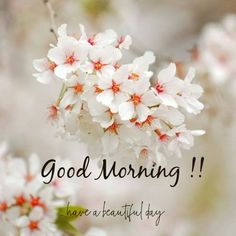 good morning wishes - good morning quotes ` good morning ` good morning quotes inspirational ` good morning quotes for him ` good morning wishes ` good morning greetings ` good morning quotes funny ` good morning beautiful Good Morning Images Flowers, Good Morning Image Quotes, Morning Quotes Images, Good Morning Images Hd, Cute Good Morning, Good Morning Texts, Morning Greetings Quotes, Good Morning Sunshine, Good Morning Picture