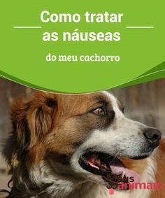Como tratar as náuseas do meu cachorro Neste artigo, vamos falar para você como podemos diferenciar as #náuseas, o porquê de os #cães sentirem isso, e o que fazer para ajudar o seu #animal. #Saúde