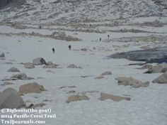 Hikers going through the snow fields on Muir Pass on the PCT