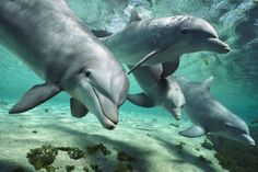 sea world Photo: dolphins. Hd Desktop, Dolphin Hd, Animals And Pets, Cute Animals, Wild Animals, Treehouse Cabins, Underwater Sea, Deep Sea Fishing, Animal Facts