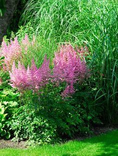 Garden Gadgets, Astilbe, Easy Garden, Garden Projects, Perennials, Flora, Planters, Herbs, Tips