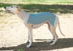 Long Whippet Sweater / White & Baby Blue / Custom by GoodWitKnit