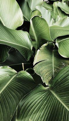 Green Leaves Clean Air – Best Garden Plants And Planting Wallpaper Bali, Garden Wallpaper, Plant Wallpaper, Landscape Wallpaper, Leaves Wallpaper Iphone, Green Nature Wallpaper, Simple Iphone Wallpaper, Tropical Wallpaper, Travel Wallpaper