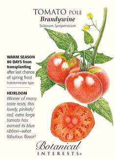 756 Best Pomidorai Images In 2019 Tomato Garden 400 x 300