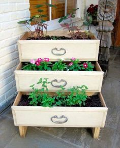 Dresser drawers used as a planter