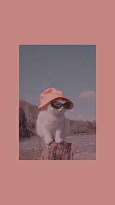 Iphone Wallpaper Cat, Cute Cat Wallpaper, Disney Phone Wallpaper, Homescreen Wallpaper, Iphone Background Wallpaper, Animal Wallpaper, Cute Cat Memes, Cat Aesthetic, Aesthetic Pastel Wallpaper