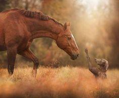 Les chevaux par etoiledelune sur We Heart It