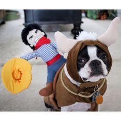 Poor random Boston Terrier. :)
