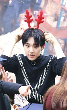 PLEDIS 17 Woozi, Jeonghan, Wonwoo, Seventeen Memes, Hoshi Seventeen, Seventeen Wallpapers, Cute Hamsters, Pledis 17, Team Leader