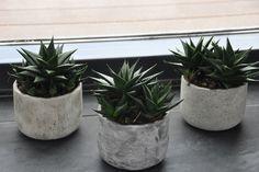 40 best plants images on pinterest indoor house plants indoor
