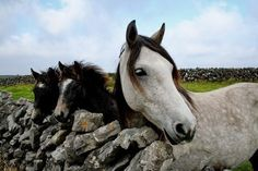 love horses <3