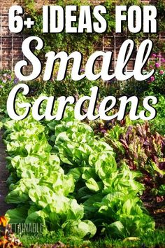 These small garden ideas will help you get the most bang for your vegetable gardening buck! You can harvest fresh produce even from your city dwelling. Urban gardens are notoriously tight on space. Adopt some of these small garden ideas and grow these productive vegetables for a bigger harvest from a small space. #garden #homestead #urbangarden