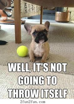 Cute French bulldog   ...........click here to find out more     http://googydog.com
