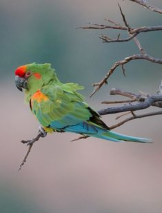 Best Sites for Wildlife in Bolivia