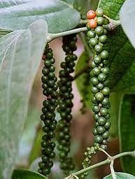 My fiance and I were just talking about peppercorns, the kind you put in a grinder for the table. I have no idea how they grow and the pictures I've found are fascinating. I'd love to grow them (tree? bush? no idea) but I need to research a bit more. Seems like something that could be very useful and giftable too.