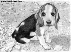 beagle Face Sketch - Yahoo Canada Image Search Results