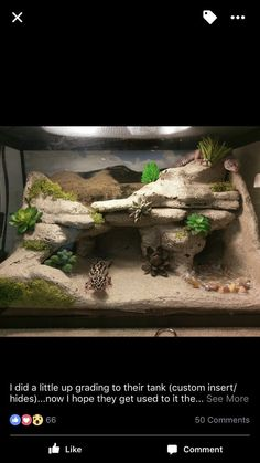 , This tank is too small for a leopard gecko, and they should never be cohabbed. , This tank is too small for a leopard gecko, and they should never be cohabbed. Leopard Gecko Cage, Lepord Gecko, Leopard Gecko Habitat, Leopard Gecko Setup, Terrariums Gecko, Lizard Terrarium, Gecko Vivarium, Les Reptiles, Cute Reptiles