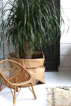 Modernisti Kodikas Porch Garden, Indoor Garden, Indoor Plants, Pony Tail Palm, Outdoor Flowers, Outdoor Chairs, Outdoor Decor, Large Plants, Beautiful Space