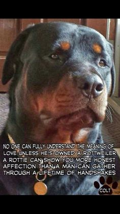 So true! If you haven't owned a Rottweiler then you truly haven't lived! #Rottweilers