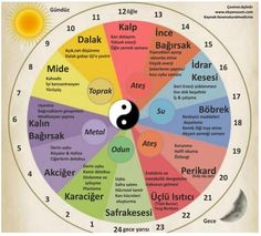 Chinese Medicine's 24 hour body clock is divided into 12 two-hour intervals of the Qi (vital force) moving through the organ system. Chinese Body Clock, Body Time, Health And Wellness, Health And Beauty, Best Time To Eat, Body Organs, Traditional Chinese Medicine, Acupressure, Endocrine System