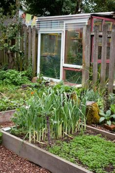 shed and raised beds