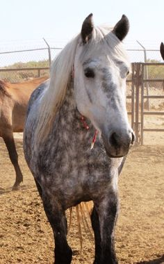 What a beautiful little Mustang mare for adoption out iin Wyoming through BLM. - Horse Number: 9436, Image Name:9436b.JPG