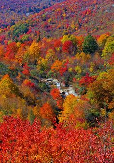 Stunning fall color along the Blue Ridge Parkway in North Carolina - looking at Second Falls at Graveyard Fields