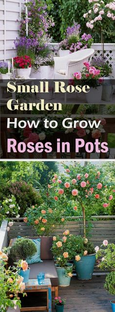How to make Small Rose Garden in containersRoses are one of the most diverse plant on planet. There are 14, 00 #ContainerGarden