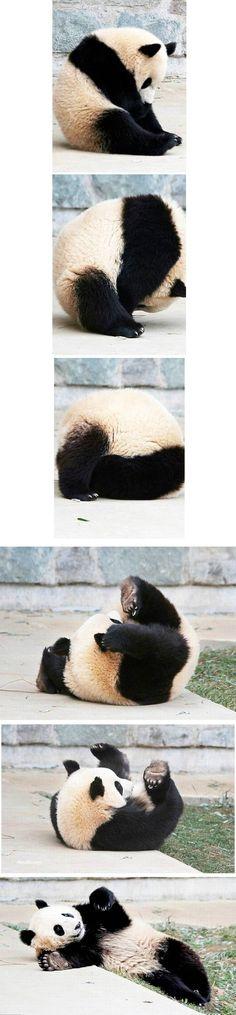 Love pandas!!!